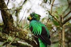 Costa Rica (joeksuey) Tags: costa mountain de hotel san rica dota 2007 gerardo quetzal resplendent savegre