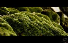 Verde (EnriqueRMG) Tags: madrid espaa detalle musgo verde spain montaa senderismo roca hierba enriquermg viajeabantos