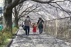 町田樹 画像88