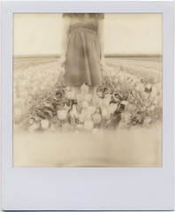 first flush (daveotuttle) Tags: polaroid tulips whitney px100 explored firstflush silvershade impossibleproject ohithinkilovethisfilm polanoidsshotoftheday