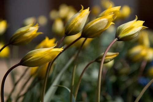 montisfont flower1
