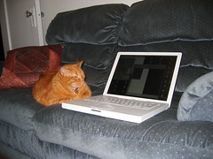 Kitty the hacker