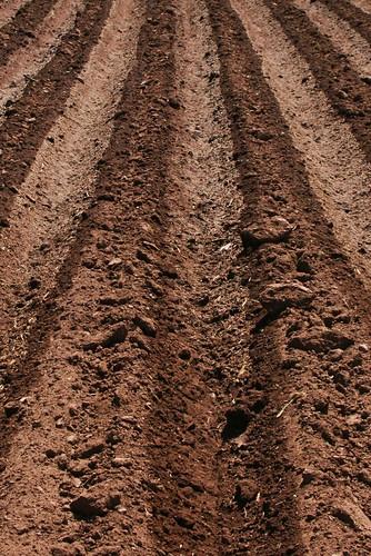 Dirt 1