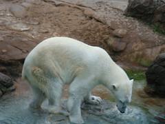 @ NC Zoo