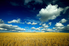 Fluffy Clouds (www.toddklassy.com) Tags: travel blue light summer sky usa cloud sunlight motion color colour texture nature beautiful field weather yellow horizontal clouds rural season landscape gold scenery montana mt bright farm empty wheat horizon coun