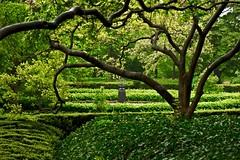 Magnolia Plaza (Diacritical) Tags: trees sundial magnolia bbg brooklynbotanicgarden 105mmf28 magnoliaplaza d700