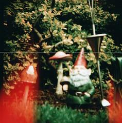 (NATALIELONGLEGS) Tags: mushroom mediumformat garden gnome crossprocessed lightleak diana amelie