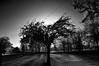 0932 (Matthew7777) Tags: sun wisconsin spring wi appleton treeonfire telulahpark