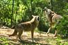 IMG_6771 (neatnessdotcom) Tags: park new york city ny zoo meadows queens corona flushing 2pair