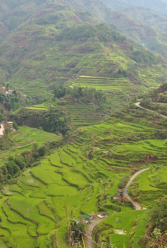 Hapao_rice_terraces