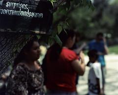 Sign (heart_of_au) Tags: color film sign tampa women florida kodak thai 4x5 wat 160vc portra largeformat graflex songkran speedgraphic presscamera portra160vc 7inch vividcolor thaiculture aeroektar pacemakerspeedgraphic kodakaeroektar thaiamerican watmongkolrata