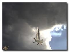 Brave Seagul (Emil9497 Photography & Art) Tags: geotagged notanhdr mygearandme ringexcellence musictomyeyeslevel1 flickrstruereflection1 geo:lat=4081172999160171 geo:lon=2469554867187503
