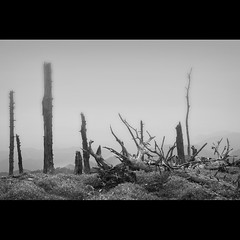 dead trees (nene-aneON - OFF)) Tags: imageourtime