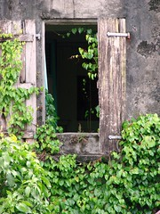 Back to Nature (2) (daniel.virella) Tags: green window decay caribbean guadalupe guadeloupe antilles basseterre frenchwestindies troisriviéres