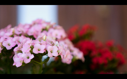 Test #4 Flower Bokeh