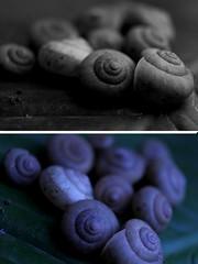 Famlia Unida... (diegojaf) Tags: macro closeup snail deperto 550d caramujos