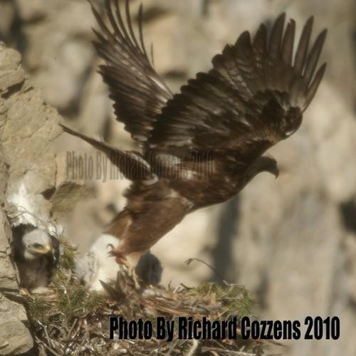 Eagles #4