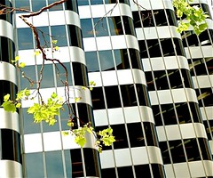 stacked (ArtsySF  ~ Marjie) Tags: trees leaves st lumix san francisco market district angles panasonic limbs financial stacked bldg shaklee 444marketstreet amazingeyecatcher zs5