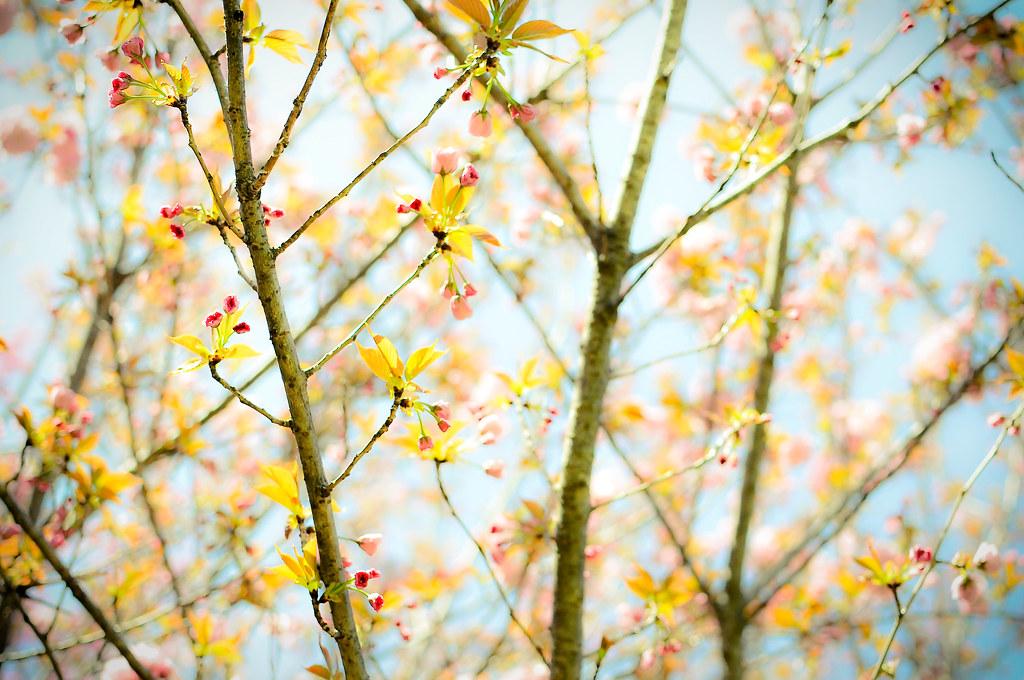 spring2010_77-46