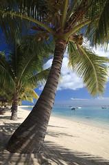 Chillen am Strand ;) (RD B) Tags: ocean africa sky nature clouds strand hotel himmel wolken bluesky mauritius palme baum blauerhimmel lemorne ozean naiade indischerozean singhray lbwarmingpolarizer lepavillonsmauritius oceanusindicus