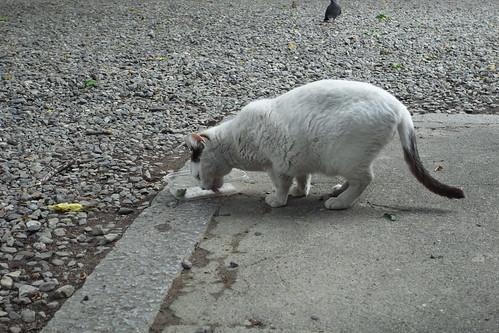 Today's Cat@2010-05-28