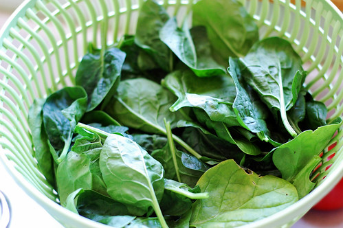 052910 Spinach Harvest