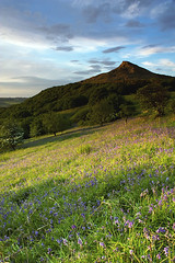 Roseberry Topping in Bloom (David Relph) Tags: england bluebells landscape middlesbrough northeast greatayton northyorkshire roseberry roseberrytopping ndgradfilters newtonwood