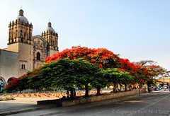 Templo de Santo Domingo de Guzmn () Tags: morning red flower tree church de mexico arbol temple early rojo arboles flor royal monastery macedonia arbor oaxaca former flamboyant domingo santo templo regia ignacio santodomingo alcala guzmn allende poinciana flamboyanttree delonix jurez monastario