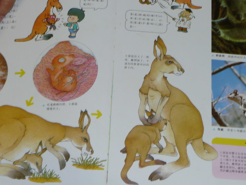 Charlene's Kangaroo Book