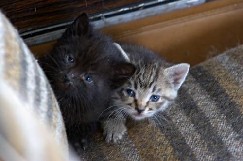 Car Kittens