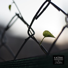 223/365 leaf.to.vine (simis) Tags: light shadow green square leaf bokeh vine 365 dailyphoto day223 project365 diamondshape