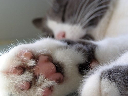 Pudding's Paw