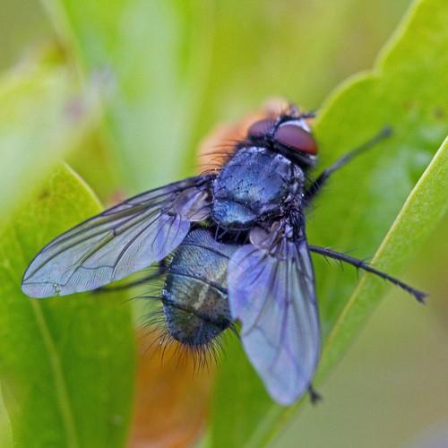 Fly #5