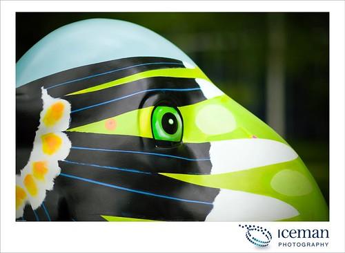 116-Hornbill