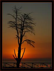 Arbol al amanecer 02