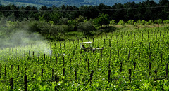fertilizer (wolfgangp_vienna) Tags: italien italy green vineyard vine tuscany fertilizer grün grapevine reben wein weinberg toskana dünger weingarten weinreben montefiridolfi düngen laloggia fattorialaloggia