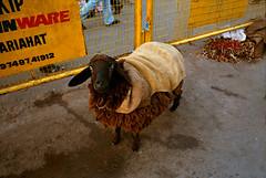 (bradford daly) Tags: street leica india west temple sheep kali 28mm goat streetphoto kolkata bengal calcutta mandir sacrifice kalighat