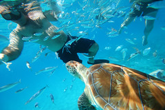 Parque Marinho Carlisle Bay (Barbados!) Tags: praia azul mar mergulho snorkeling barbados paraso caribe mergulhar carlislebay