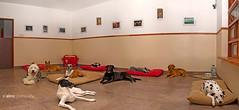 A Casa da Dogwalker_04
