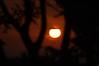 Erice - Tramonto tra gli alberi (kikkedikikka) Tags: sunset nikon strada italia tramonto sole saline sicilia panaroma erice trapani tonnara scoglio d40 nikond40 rgspaesaggio rgscastelli rgsnatura rgsscorci