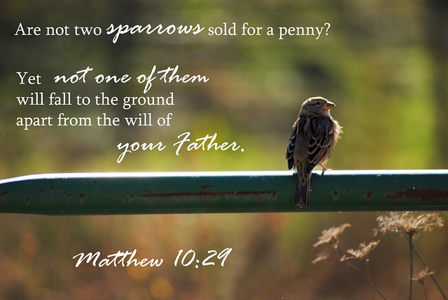 Matthew 10:29