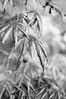 DSC_6989 (Per Erik Sviland) Tags: erik per pererik sviland sqbbe pereriksviland