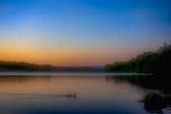 Sunset Cruising (Cederquist Christoffer) Tags: mallardsunsetwaterdawnlakeeveningreflectiondusknatureoutdoorsskylandscapesuntreeplacidriversummertravelvisitingcomposurebeautifulharmonyswedencederquist