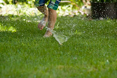 Water Sport 3 (LongInt57) Tags: person people boy child children running playing fun water sprinkler recreation lawn grass splash wet summer kelowna bc canada okanagan play run jump jumping splashing yard garden