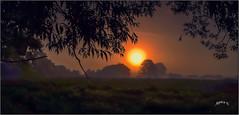 Bitesize Slices Of Sunrise. Part 3. (Picture post.) Tags: landscape nature green mist sunrise summertime willow trees alder fields paysage arbre brume frame horizon panorama silhouette