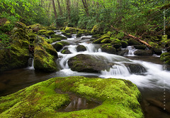 Roaring Fork Great Smoky Mountains National Park (Mark VanDyke Photography) Tags: greatsmokymountains smokymountains smokies greatsmokymountainsnationalpark gsmnp roaringfork roaringforkmotornaturetrail tennessee gatlinburg nationalpark green moss rocks lush growth spring outdoors outside landscape appalachianmountains southernappalachianmountains appalachians