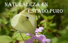 NATURALEZA EN ESTADO PURO