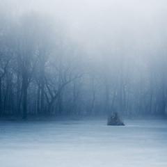 misty grove #18 (Kikasz) Tags: wood trees lake misty fog fairytale 50mm december grove f18 31 szilveszter vc kd liget fk dlutn fairyland50tumblrcom