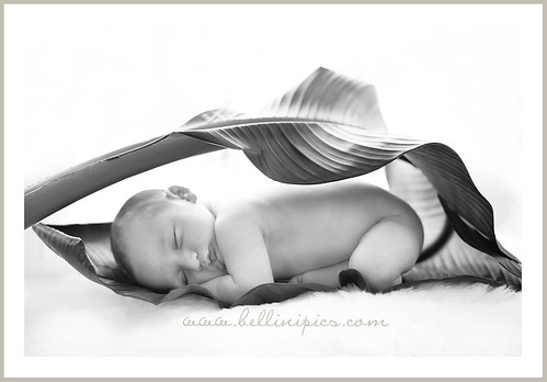 prop ideas for baby pictures. Newborn prop ideas. A gallery curated by hummingbirds1 | 4 photos | 49 views