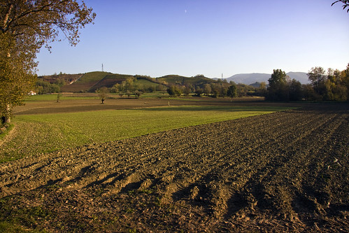 Monferrato Fields